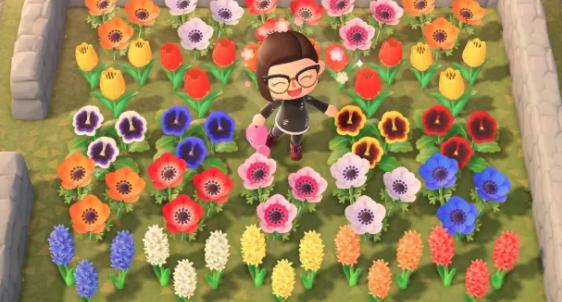 Plant Hybrid Flowers
