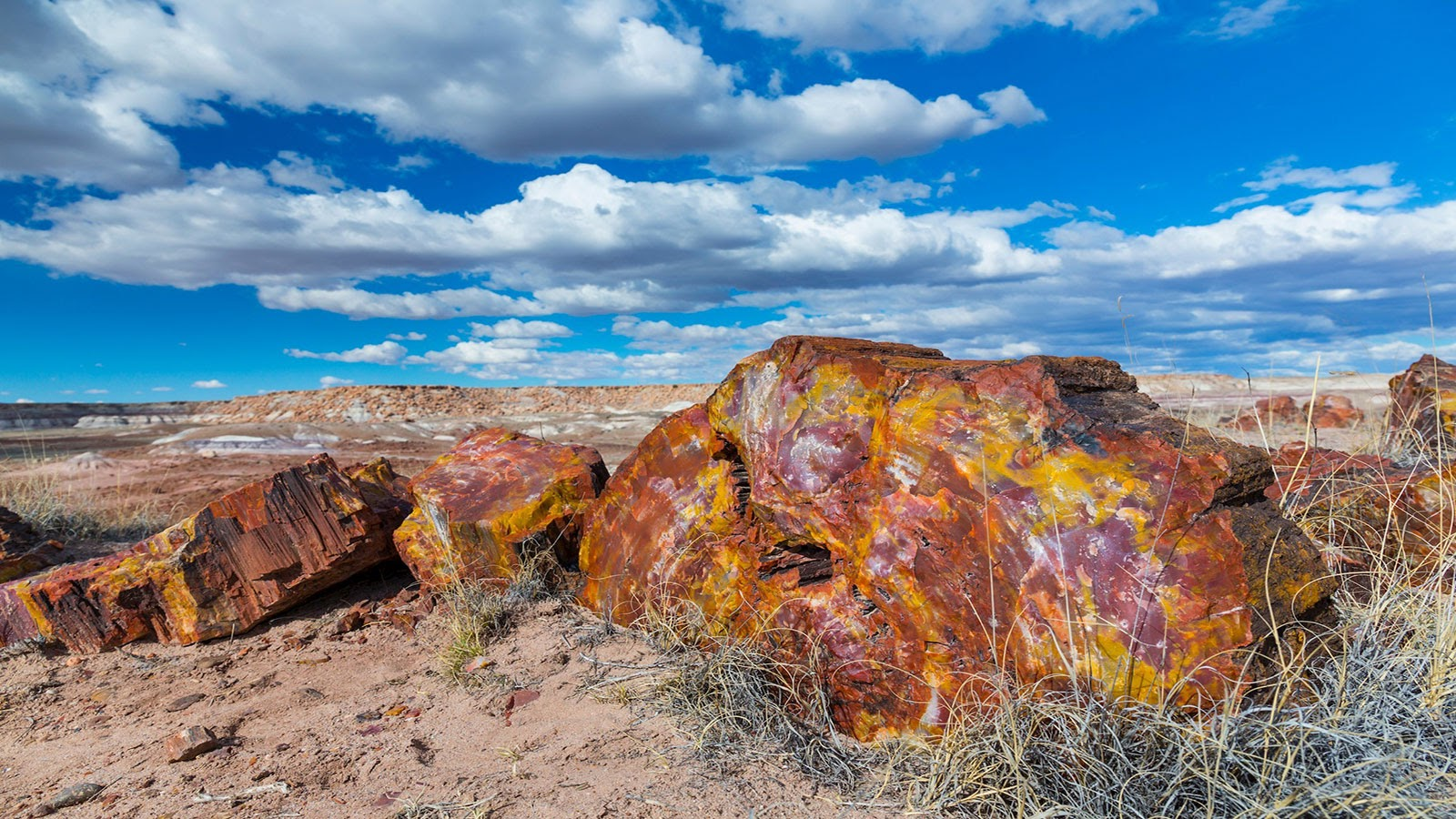 石化林国家公园 Petrified Forest National Park, AZ