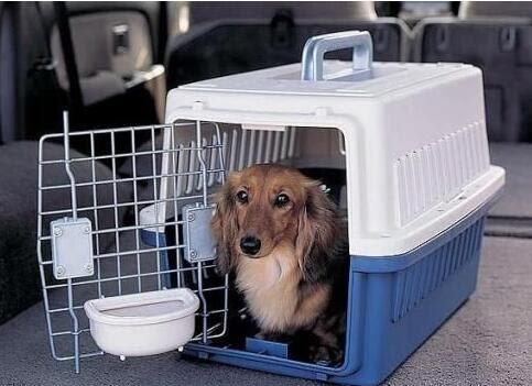 宠物运输公司承运