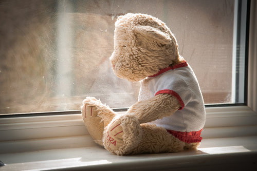 a teddy bear looking out a window