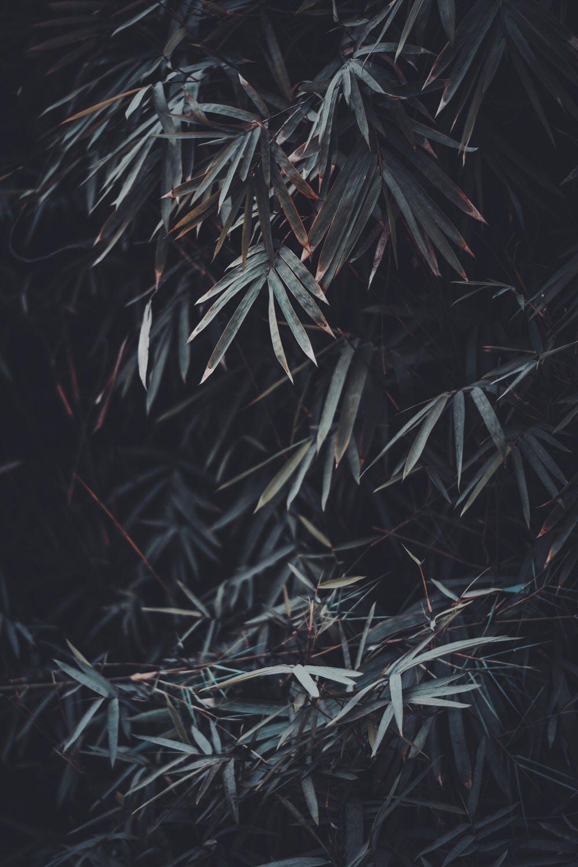 Beautiful plant in webdesign studio the silent studio