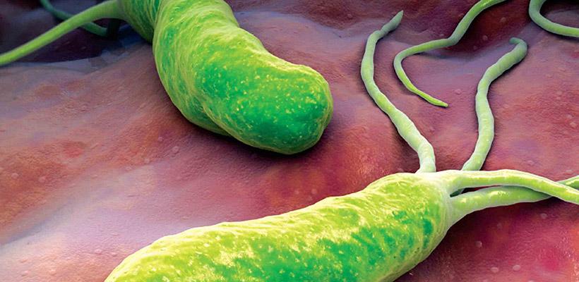 Probiotika vs 'Helicobacter pylori'