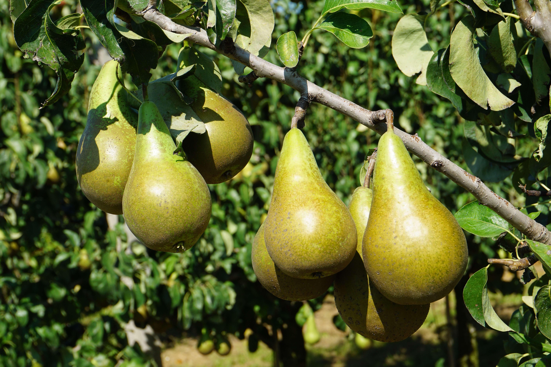 hermans fruit in de zomer