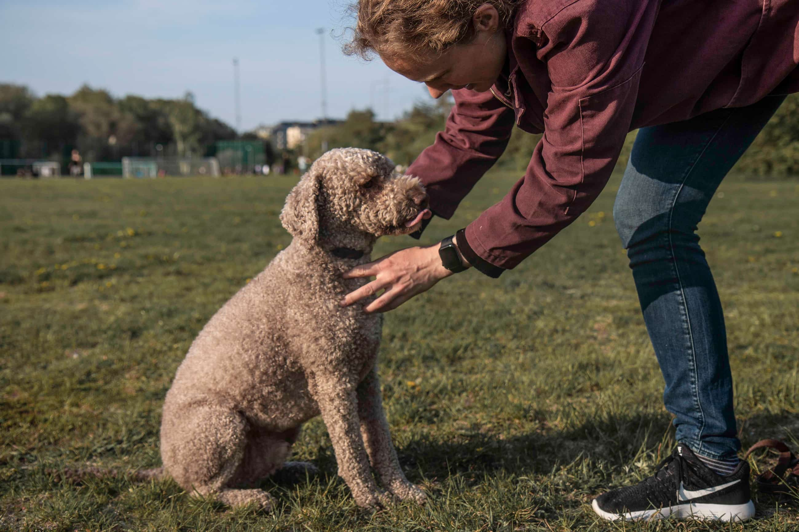 Artan Mansouri Dog tracker Tracy