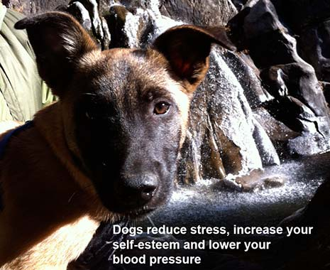 reduce depression and lower BP with a dog