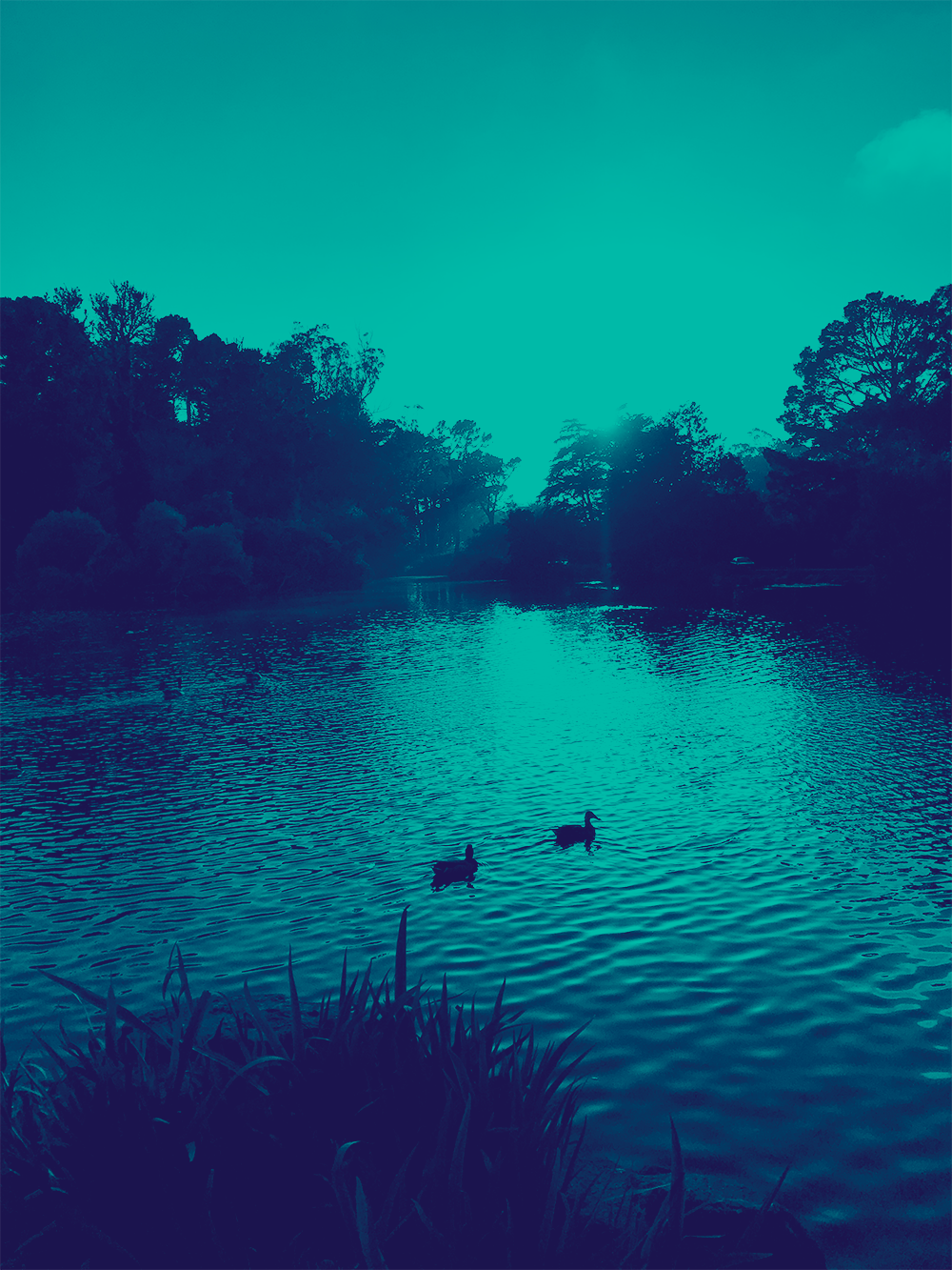 Two ducks float on Stow Lake. The sun is low on the horizon and highlights the water under the ducks. The lake edge is ringed in trees and grasses. The image has a blue tinted overlay.