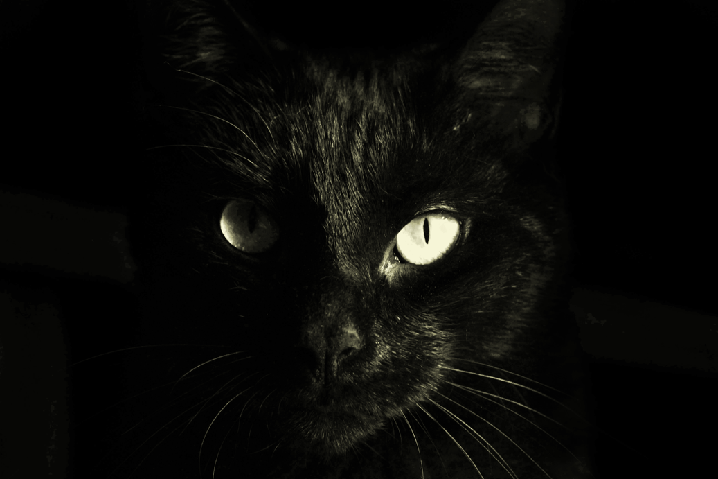 Photo is a closeup of a black cat's face. The cat has light yellow eyes