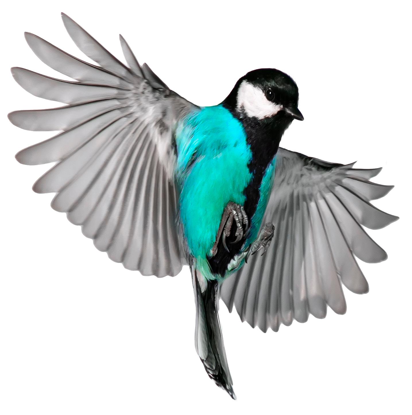 Image of bird in flight