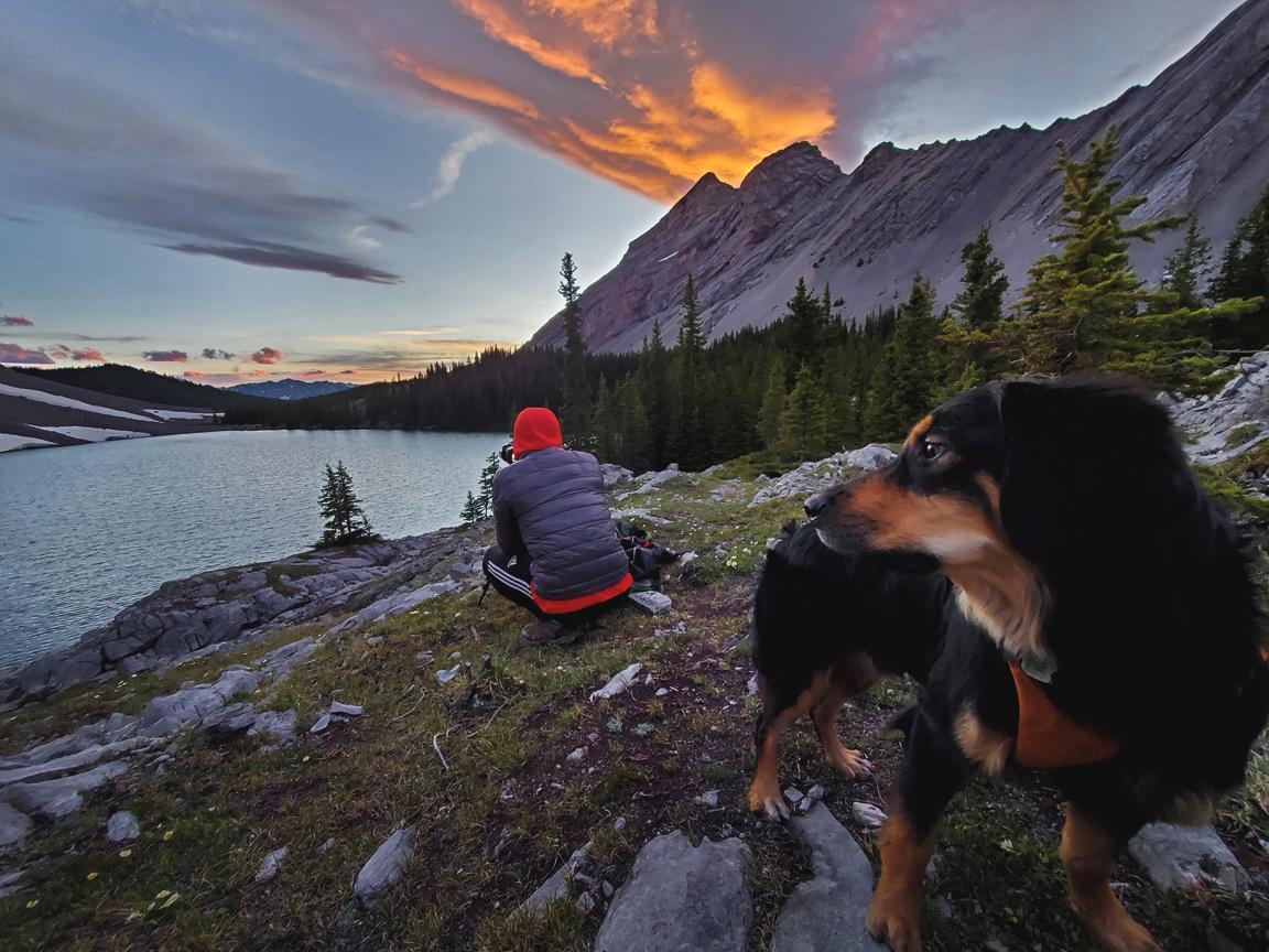 black dog looking at photographer in front of lake with orange clouds rising behind mountains at pickle jar lakes kananaskis