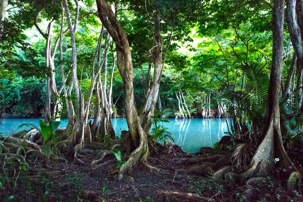 Caribbean mangrove