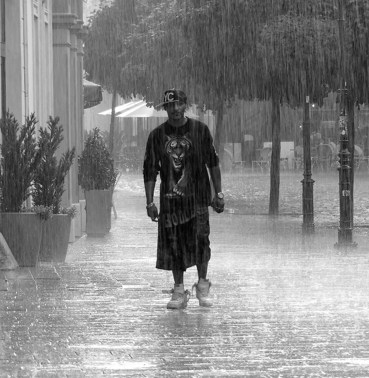 Tiger v daždi