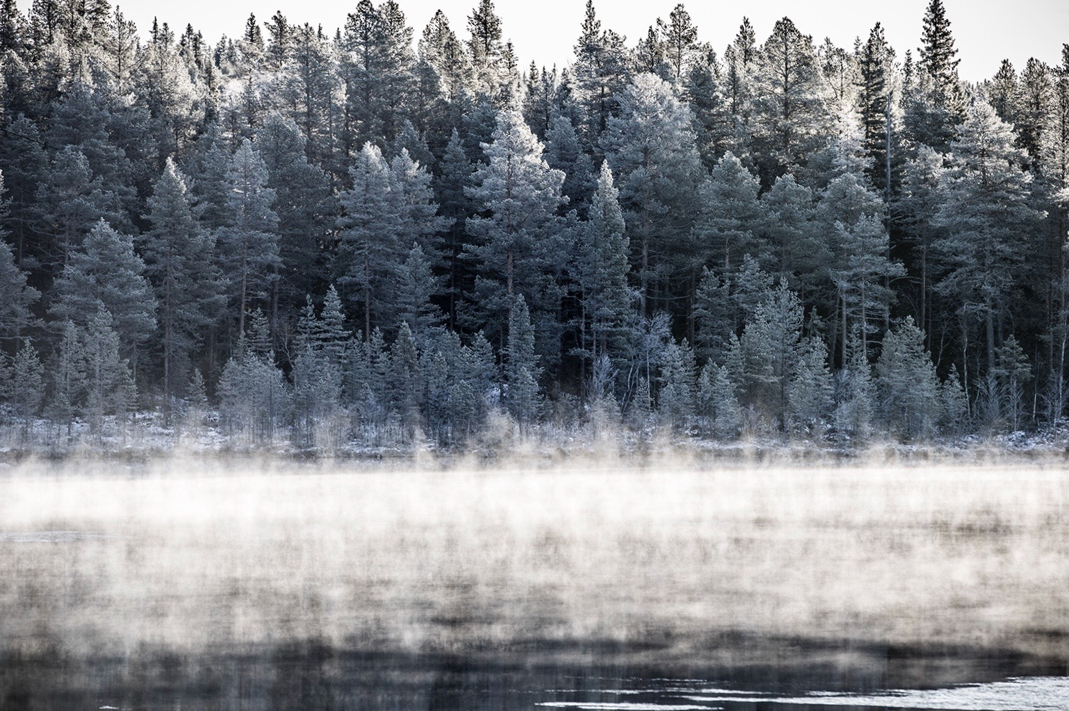 Birch trees line the side of a misty lake