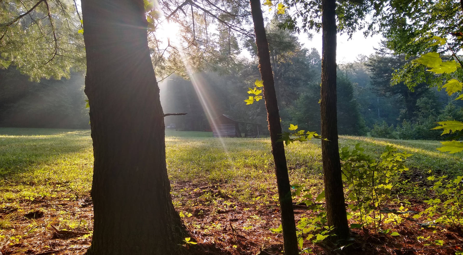 Morning light shining through trees across grassy clearning in forest.