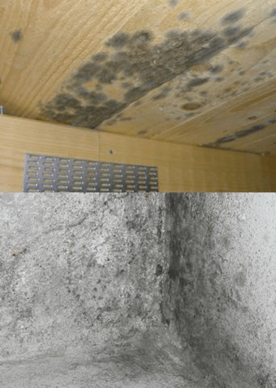 JAPE MOGEL FRI 0.5L Līdzeklis efektīvai pelējuma un sēnīšu likvidēšanai iekštelpās griestiem grīdai