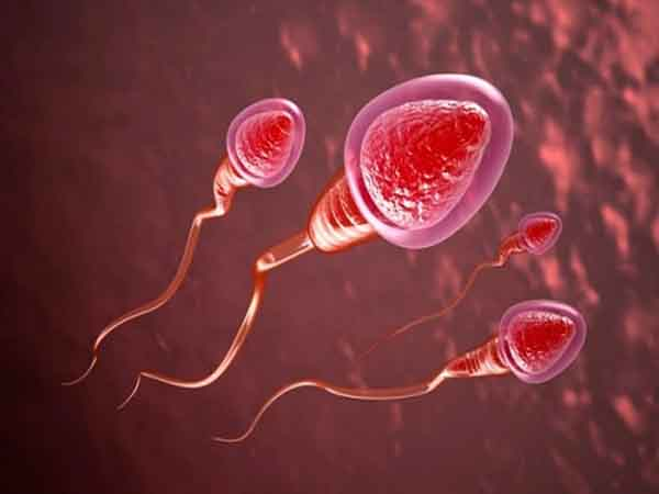 Cách nhận biết tinh trùng khỏe mạnh