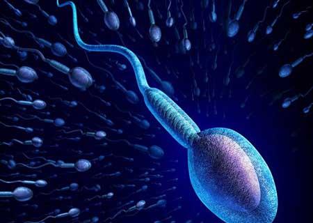 Tinh trùng là gì?