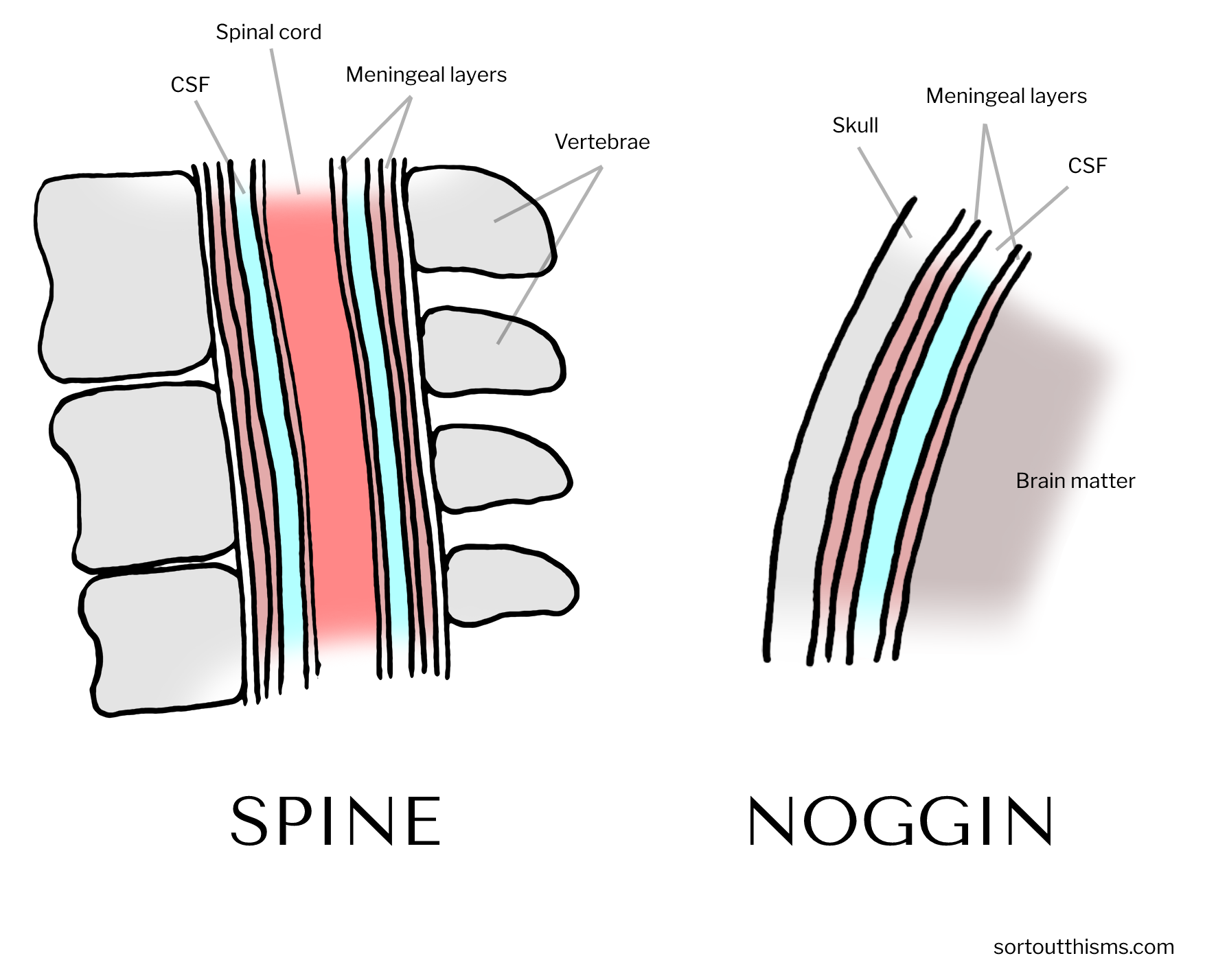 Spine and noggin in the central nervous system | Sort Out This MS