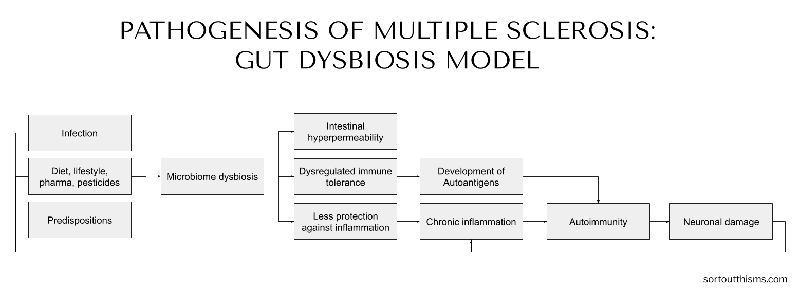 Pathogenesis of Multiple Sclerosis: Gut Dysbiosis Model | Sort Out This MS