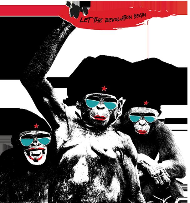 Three bonobo rebels