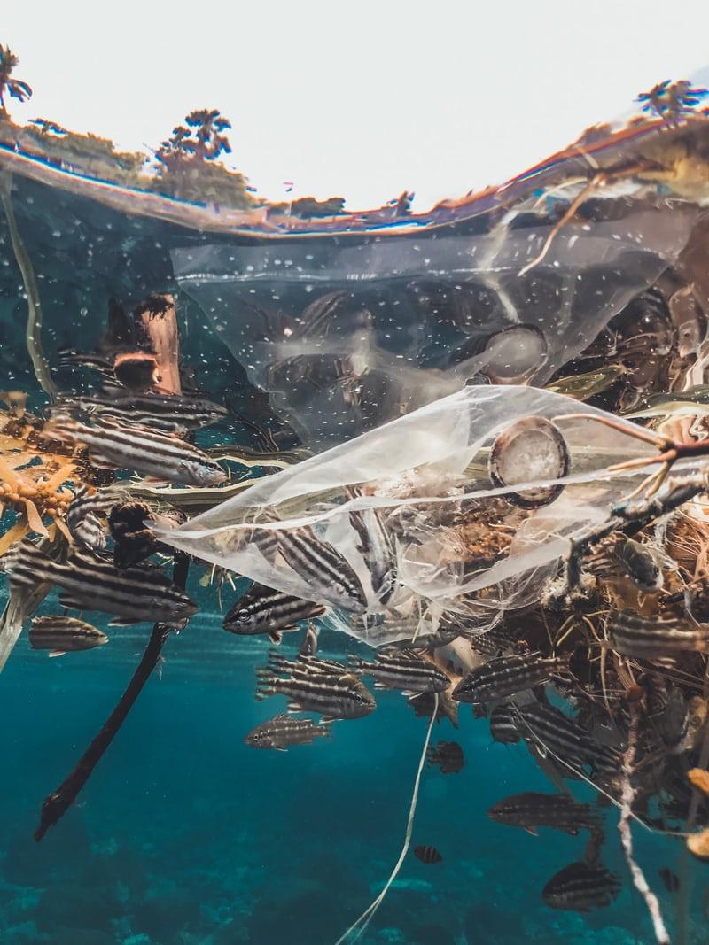 Beauty industry Water Turtle Pollution