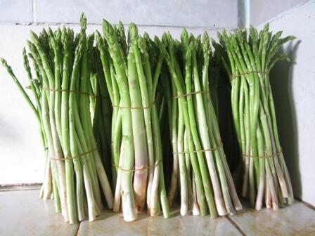 Măng tây là loại cây có nhiều tác dụng đối với sức khoẻ