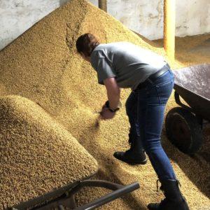 scooping grains