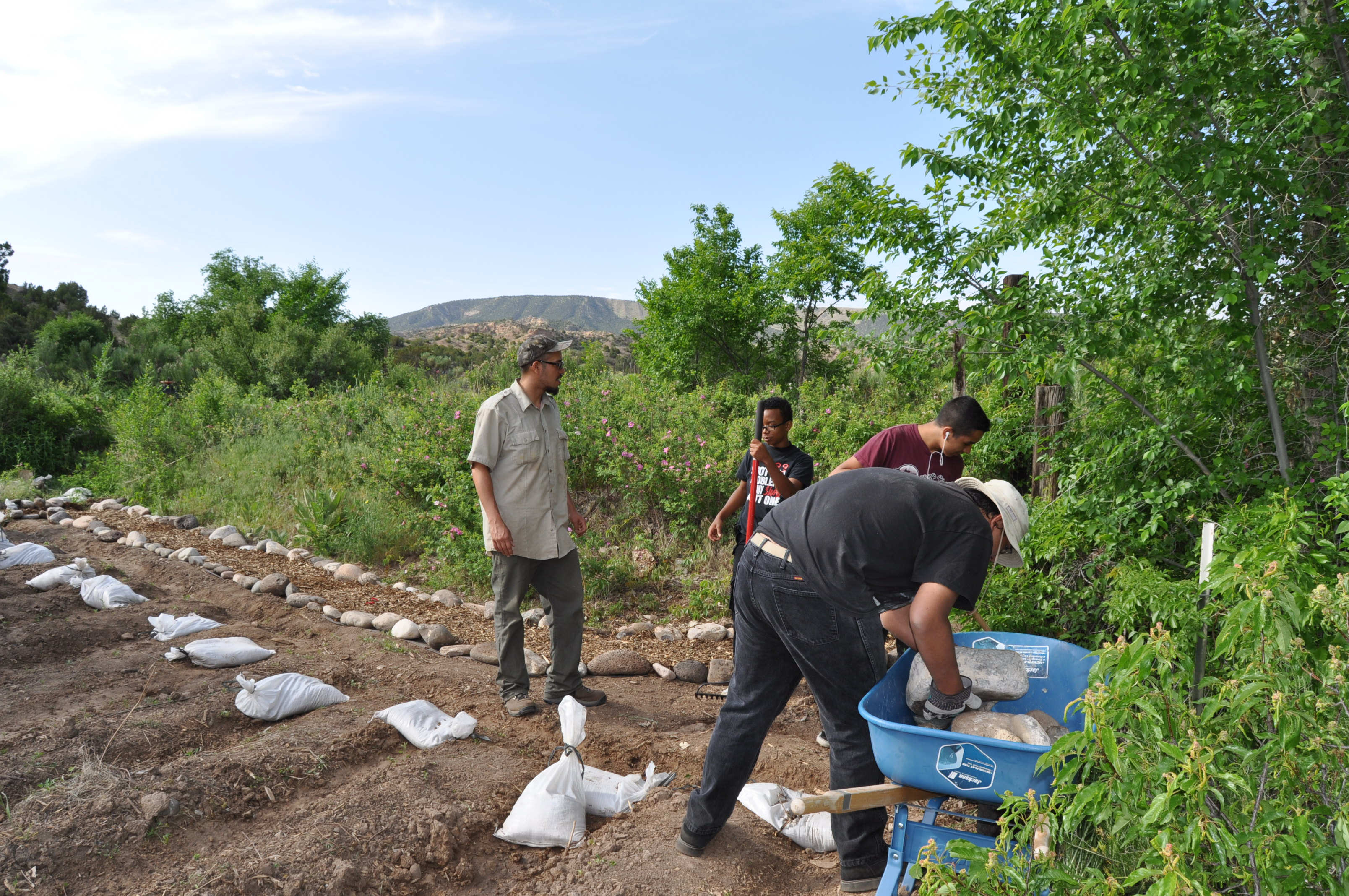 preparing pollinator garden beds