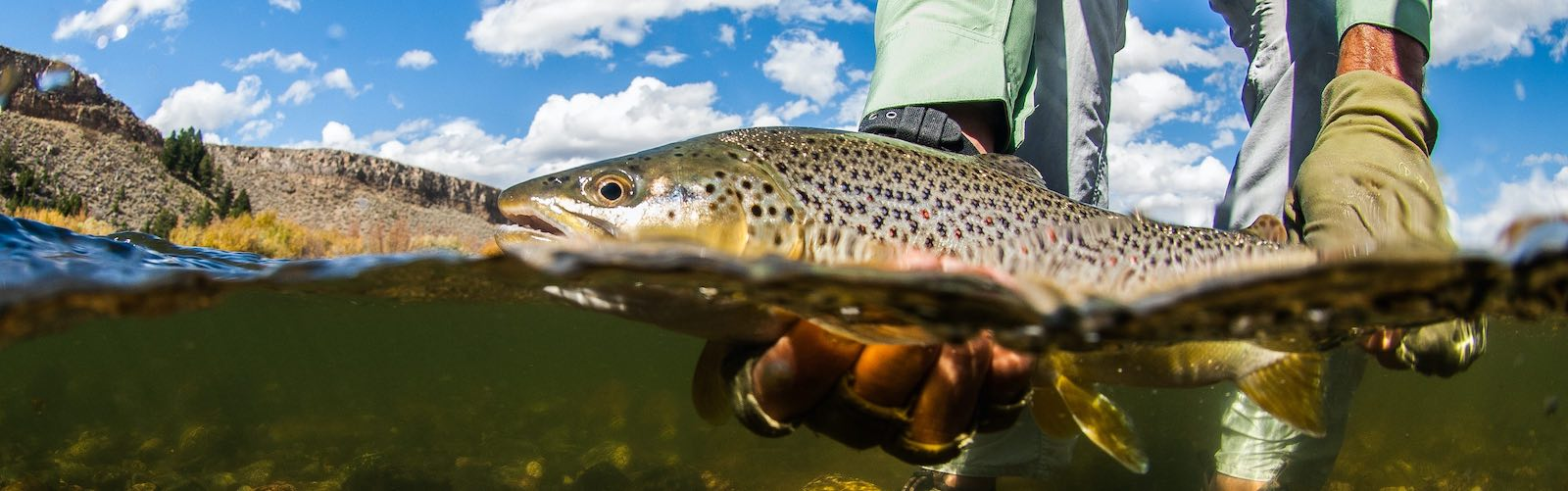 Fly fishing report for the Madison River.