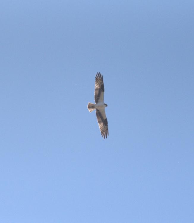 Birds in Montana.