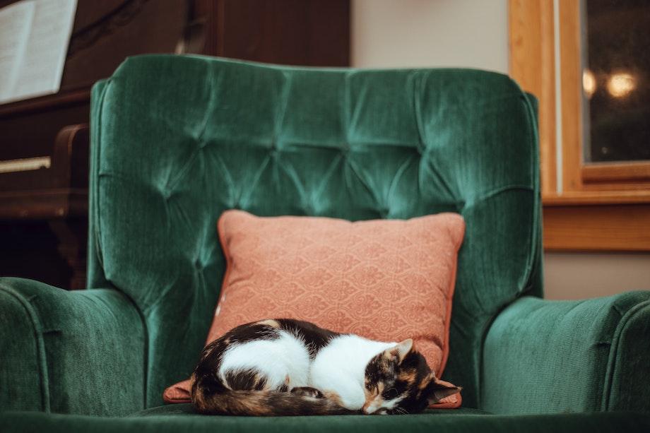 Chat sur un canapé