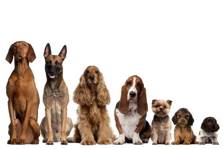 Image result for unique dog names