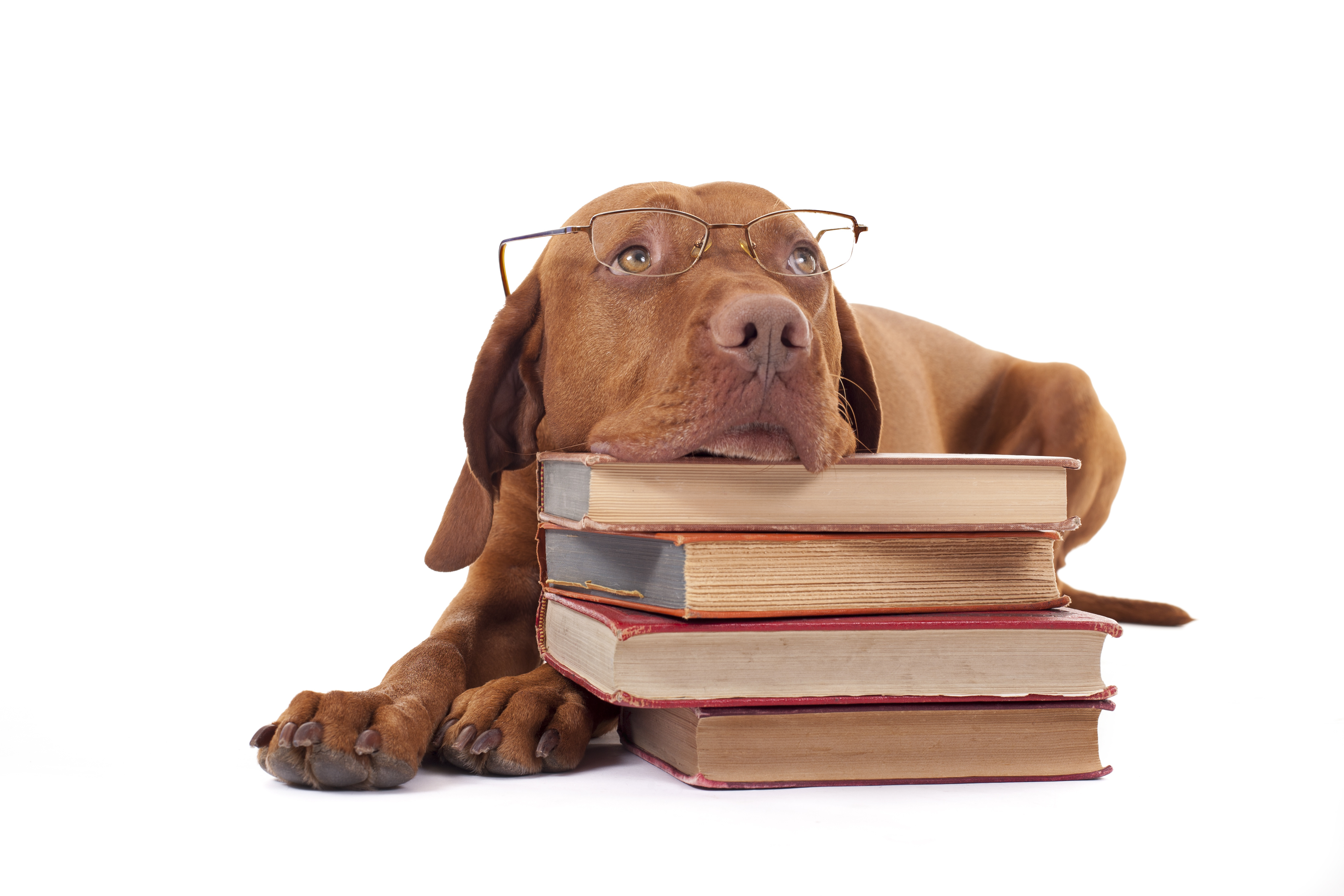 Image result for dog sitting on a pile of papers