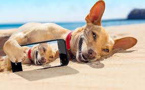 Image result for dog with smart phone images