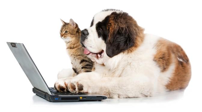Image result for dog on computer image