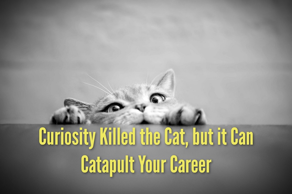 Curiosity Killed the Cat, but it Can Catapult Your Career