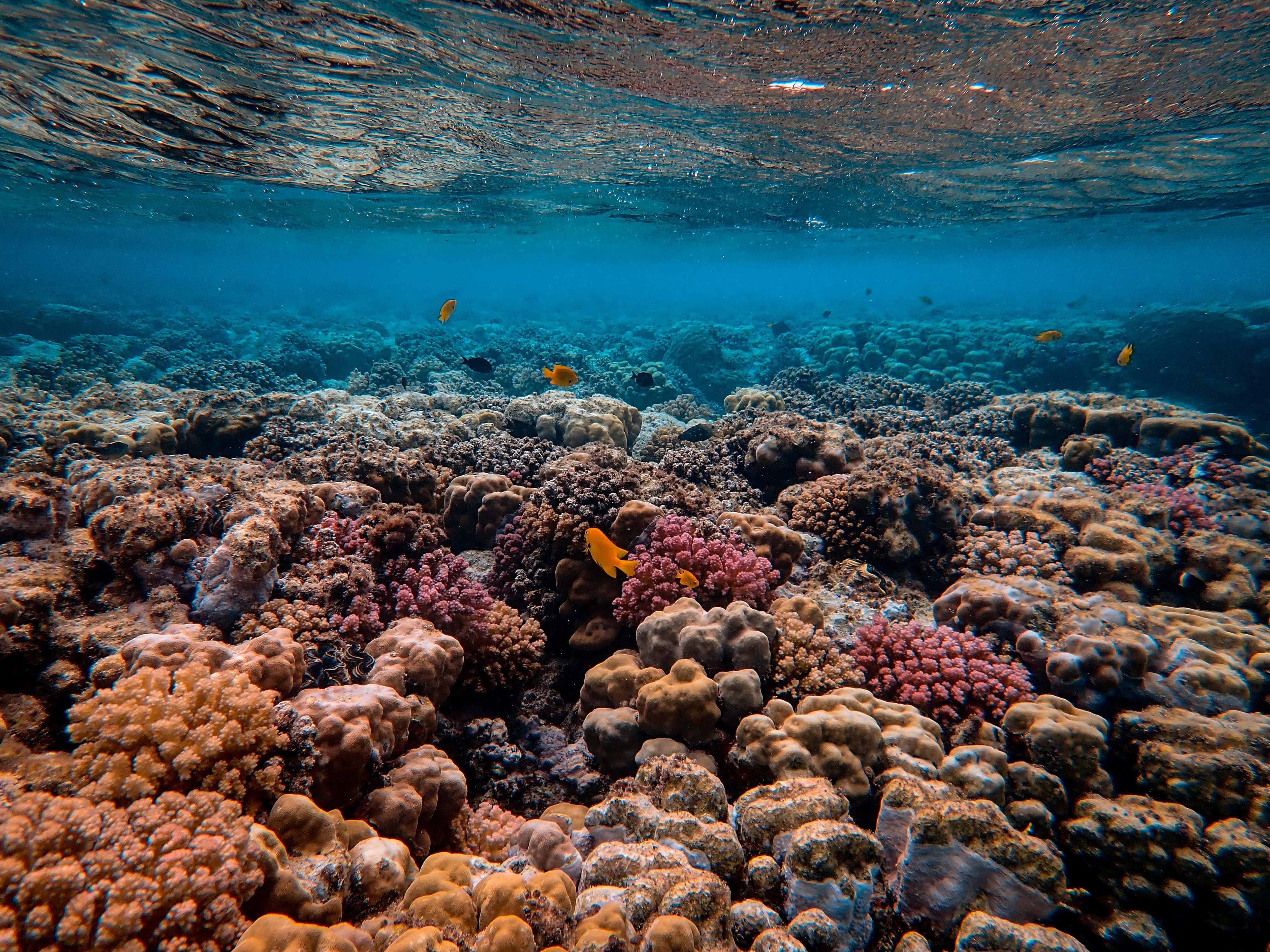 okyanus iklim değişikliği