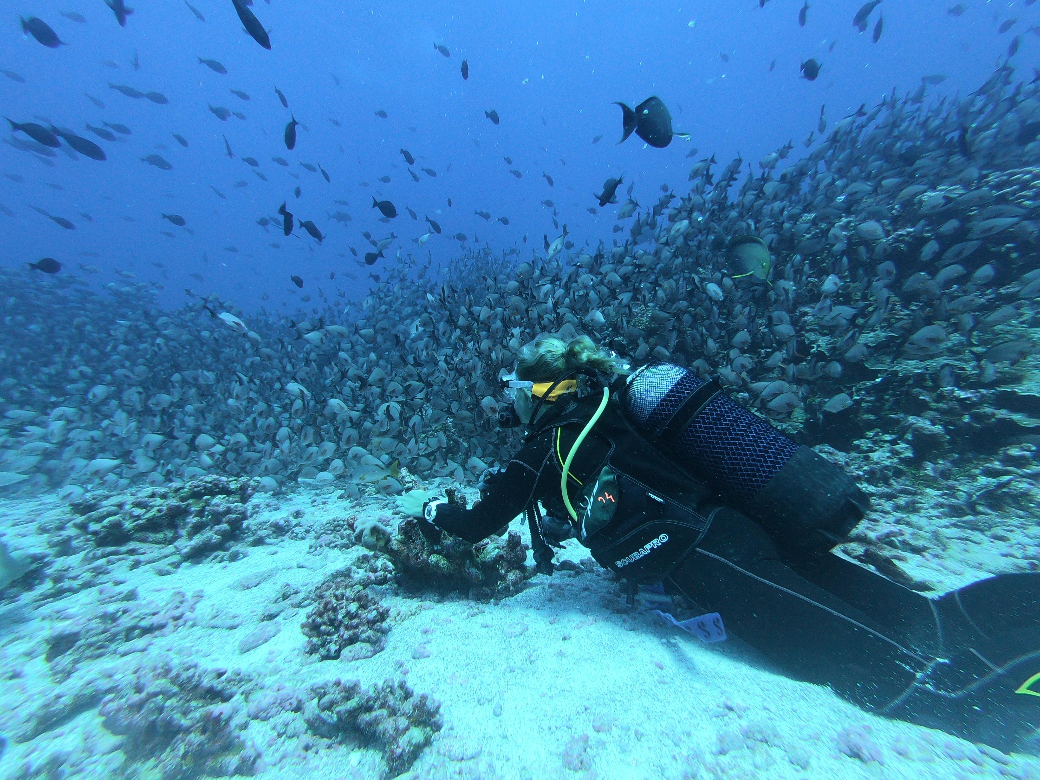 Tüplü dalış, su altı, balıklar