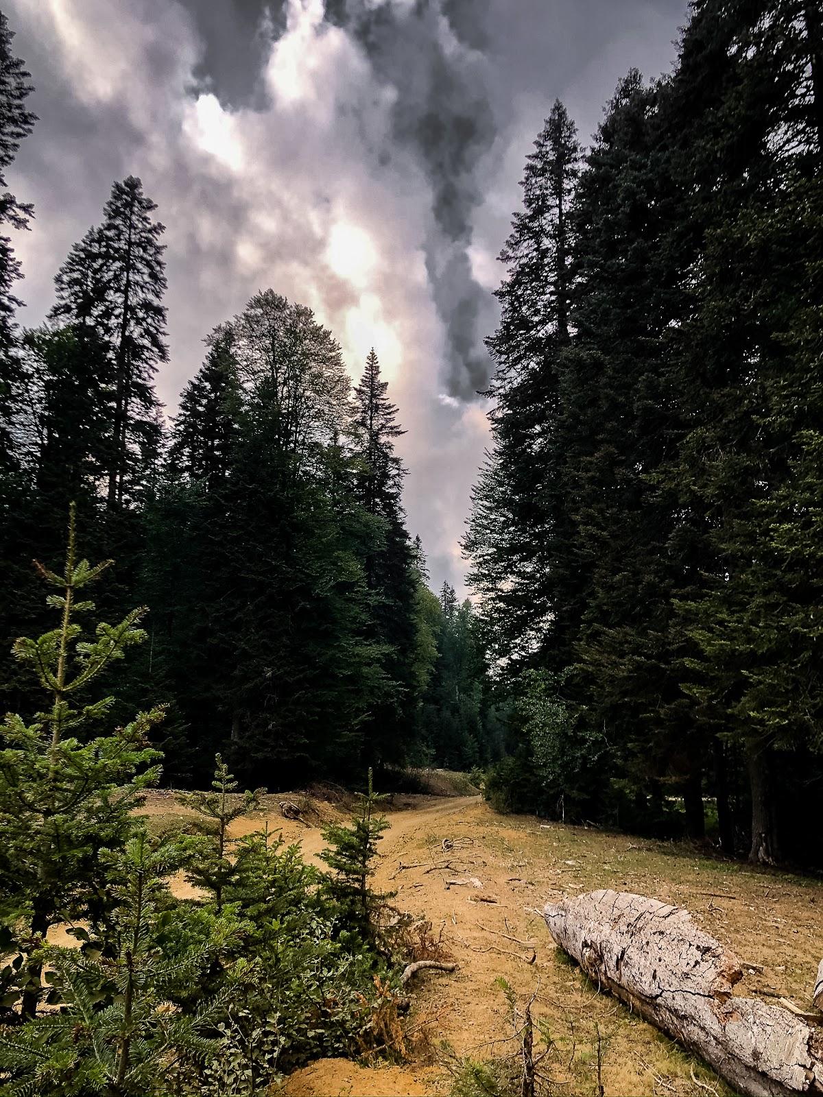pürenli yaylası orman