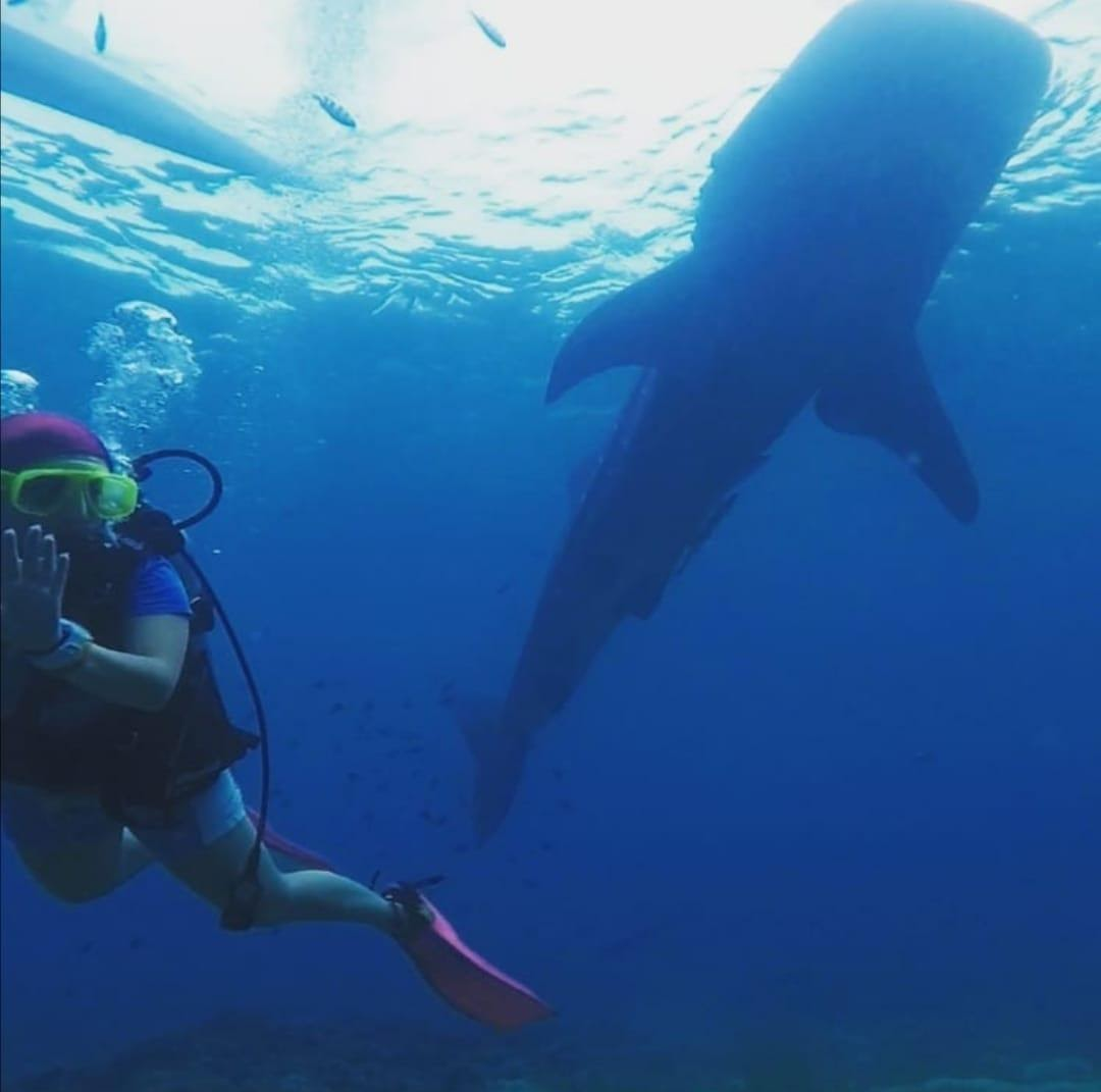 Balina Köpek Balığı(Whale Shark) tüplü dalış maldivler