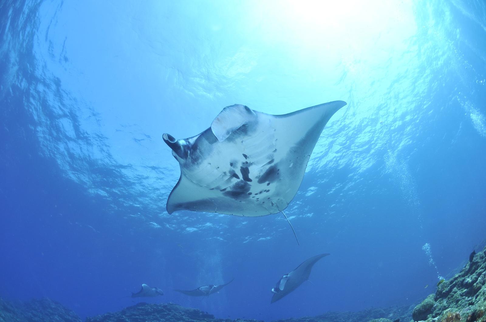 Masako Uchiko, Pixabay Maldivler tüplü dalış