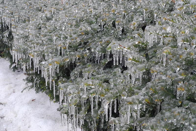 Sulu Sepken kar şekilleri macerita