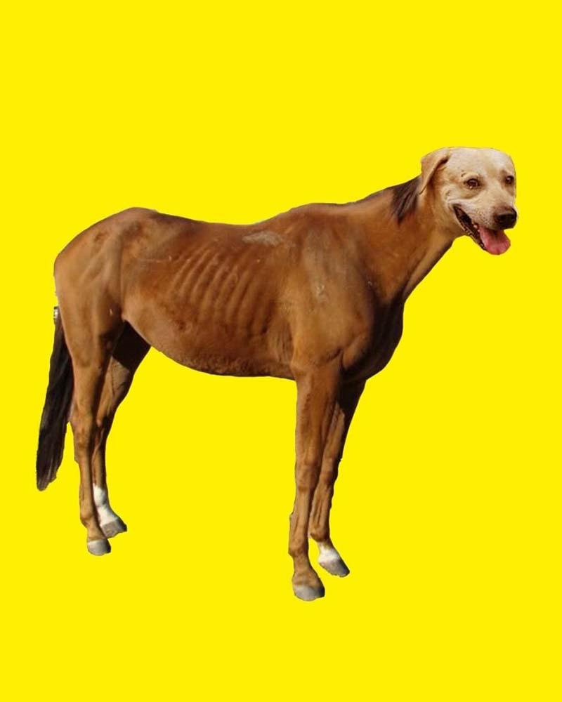 Caballo Perrro