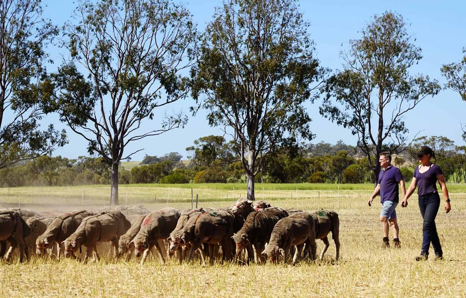 Using smart tags to monitor sheep behaviour