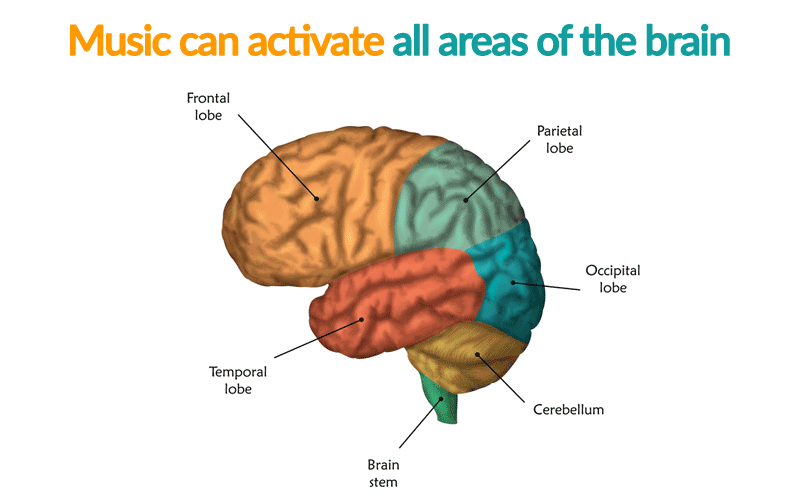 Image showing all lobes of the brain.