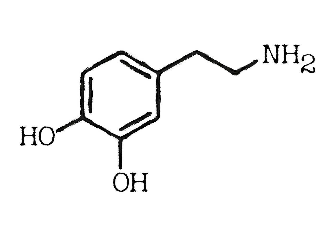 White and black chemical structure of Dopamine featuring Oxygen, Hydrogen, and Nitrogen atoms.