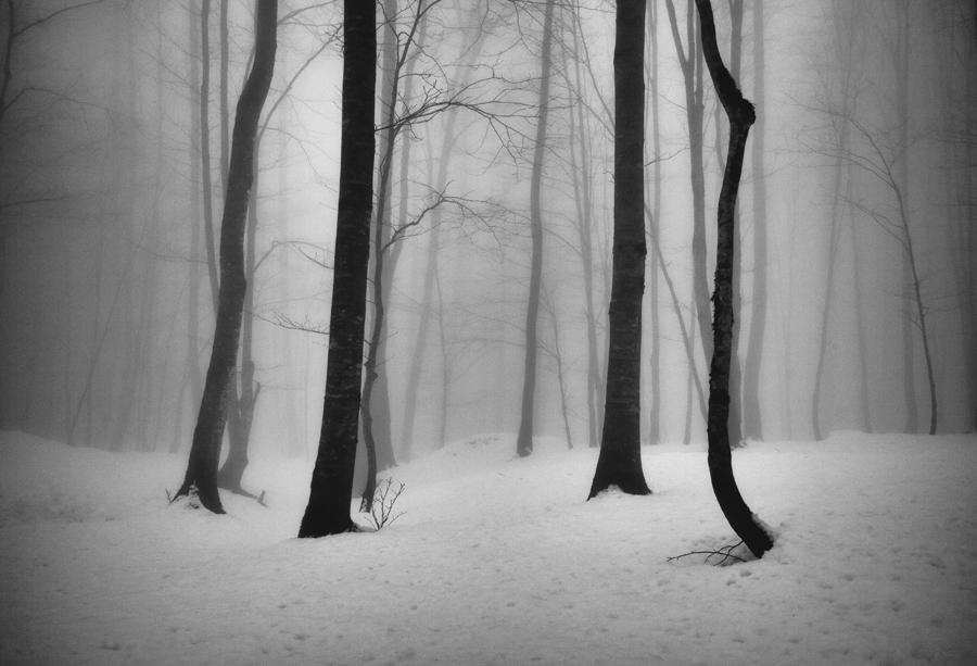 © Ali Shokri - Passion of Trees