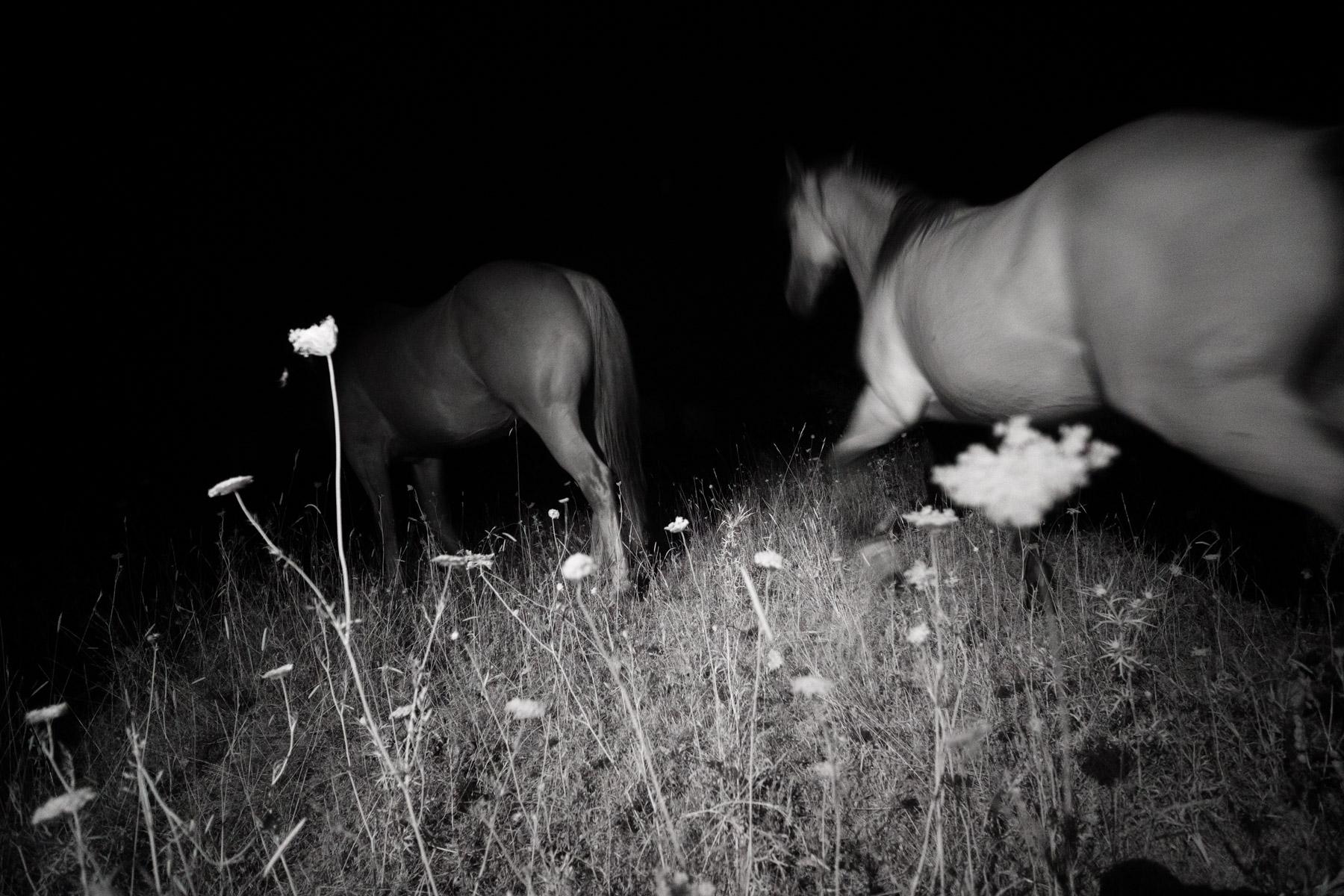 © Alfonso de Gregorio - The Mallards' Call