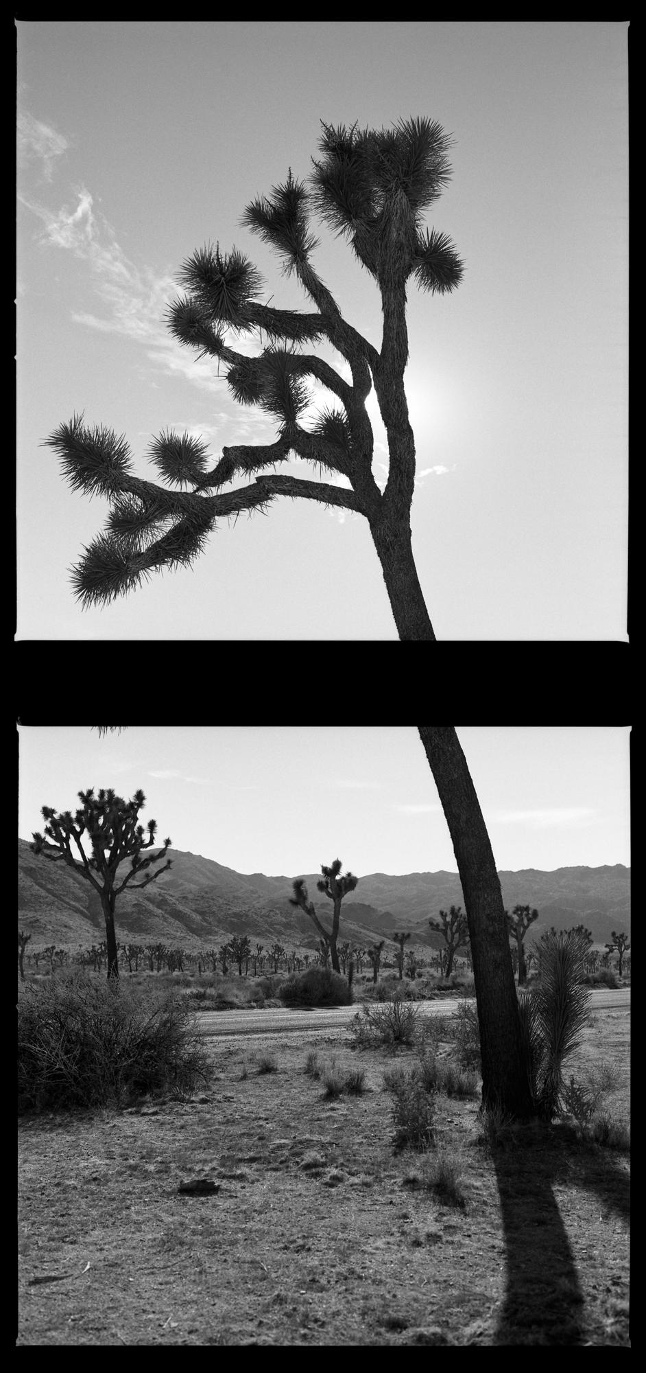 © William Mark Sommer (Sacramento, California) @williammarksommer   Established View