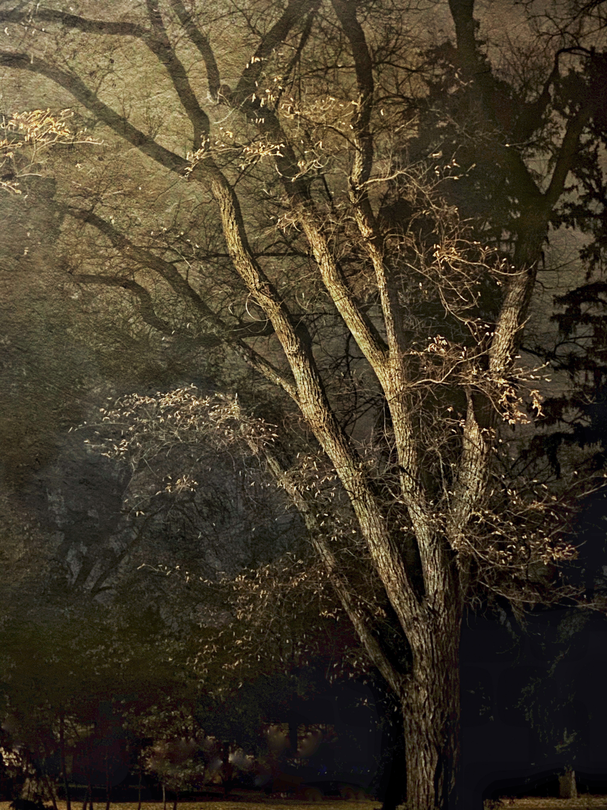 ©Wendi Schneider (Denver, Colorado) | Under the Tree