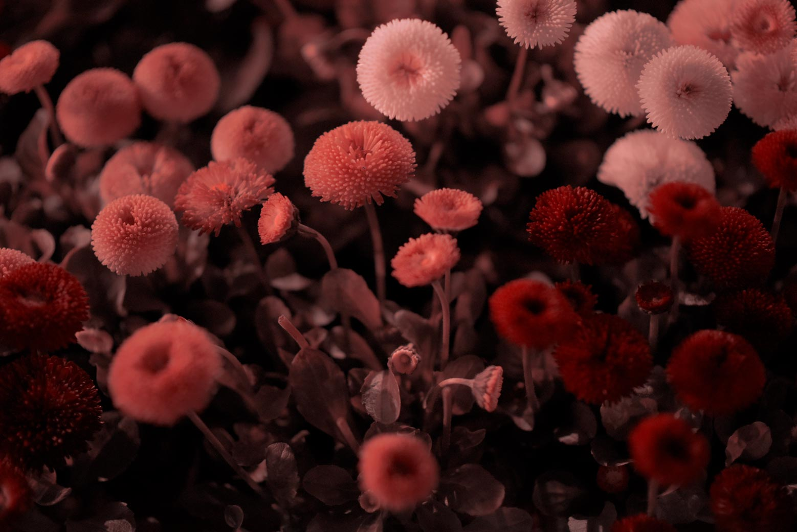 © AristoVopĕnka (Brussels, Belgium) | Night Flower 3